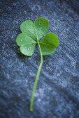 A clover leaf