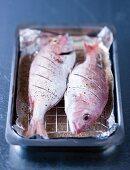 Home smoked fish