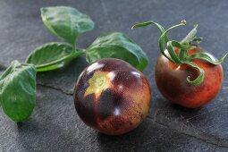 Tomaten der Sorte OSU Blue