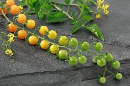 Yellow Currant cherry tomatoes on a stone surface