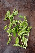 Sprigs of basil with flowers on a metal surface
