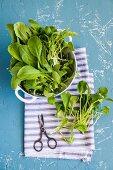 Frische Radieschenblätter im Küchensieb