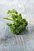 Curly-leaf parsley on a blue wooden background