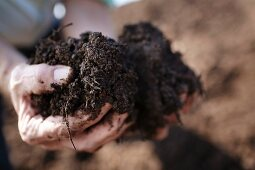 Hands holding a pile of soil at the Peter Jakob Kühn winery in the Rheingau region of Germany