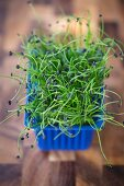 A box of rock chives sprouts