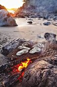 Oysters over a beach fire in Tofino, British Columbia, Canada