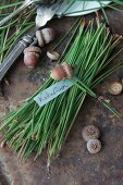 A bunch of pine needles and acorns with a name tag
