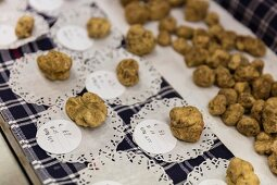 White truffles at the stall of Bruno Gallo on the truffle market in Alba, Piedmont, Italy