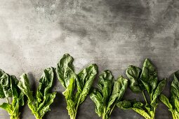 Row of spinach leaves on a grey stone surface