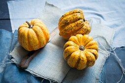 Chameleon pumpkins on blue fabric