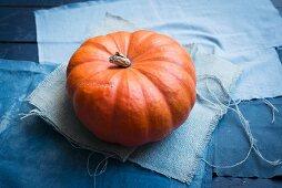 Pumpkin of the species Red Zentner on blue fabric
