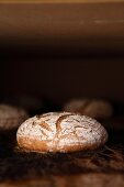 Rye-wheat bread in the oven - the bloom increases in size