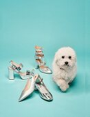 Verschiedene Sommerschuhe in silberner Metallic-Optik mit einem Hund daneben