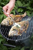 Gilthead seabream on the barbeque