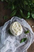 Freshly made ricotta on a cheesecloth with basil
