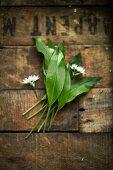 Wild garlic on wood