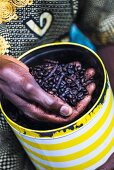 Coffee beans flavored with Selim pepper for Touba (coffee specialty, Senegal)