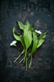 Fresh wild garlic leaves and flowers on a dark metal background (seen from above)