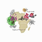 Medicinal herbs from Africa