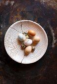 Various fresh eggs on cracked plate