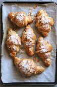 Freshly baked french croissant with almonds on a tray