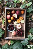 Fresh stone fruits in a wooden box, surrounded by leaves (top view)