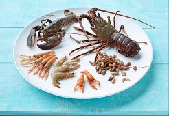 Various crustaceans on a white plate