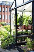 Greenhouse in roof garden of Stedsans Restaurant, Ostergro, Copenhagen, Denmark
