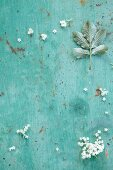 Elderflowers and leaves on a turquoise surface