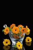 Fresh marigolds in a glass mortar