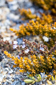Wild plants on a pebble beach