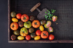 Various tomatoes on a wire rack