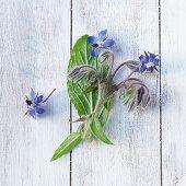 Borretsch mit Blüten