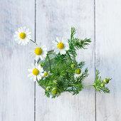 Kamille mit Blüten