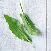 Zwei Sauerampferblätter