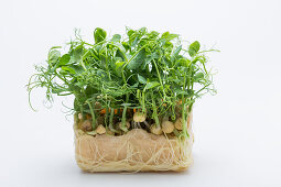Pea sprouts with leaves and root balls