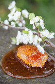 Honeycomb in liquid honey, with a flowering cherry branch