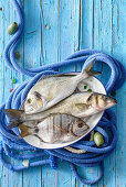 Dorade, seabream and sea bass on a blue rope