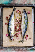Fresh Mackerel Fish with Herbs and Lemon for baking on the baking tray