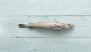 Hake on a pastel-blue surface