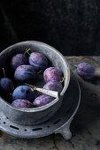 Still life of plums Bleue de Belgique on a zinc background