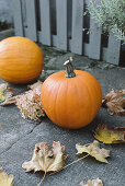 Pumpkins and autumn leaves by a garden fence