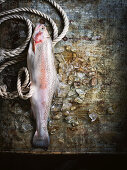 Raw rainbow trout on ice