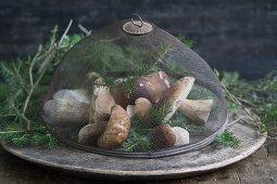 Fresh mushrooms under a mesh cover