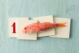 A fresh red mullet on wooden boards