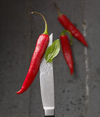 Red hot peppers and basil on a knife tip with water droplets
