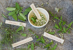 Fresh herbs on a log (sage, mint, horsetail, yarrow)