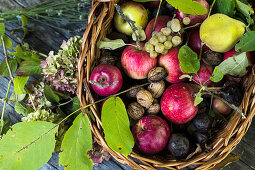 An autumnal still life with apples, pears, grapes and walnuts