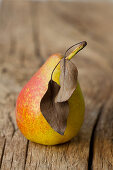 An organic pear with dry leaves