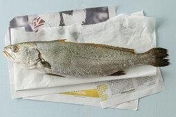 Adlerfisch auf Papier